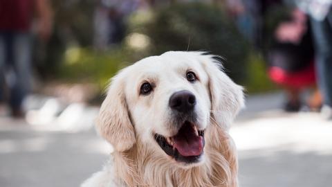 北京推禁狗令禁養35cm大型犬 要求主人3日內處理疑爆發狗隻安樂死潮
