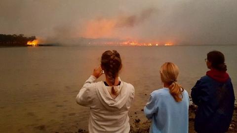 澳洲大火引起全球關注欲伸出援手救助 一文睇晒7個捐款/眾籌/助養樹熊方法