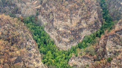 澳洲終有雷雨但大火仍要3月才有望熄滅 消防員力救稀有恐龍樹幸好得以保存
