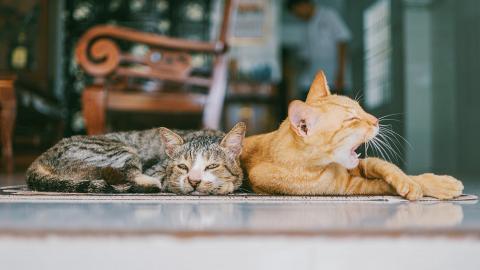 用錯清潔產品或令貓狗患癌!3大寵物無害清潔家居方法