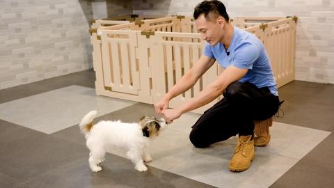 【專人在線】星級馴犬師Eric坦言教人難過教狗 盼助人犬建立互信減少棄養寵物