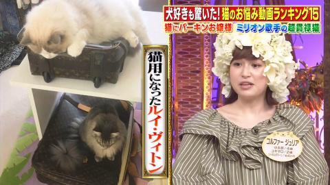 半島董事千金公開雙層豪宅豪華生活 與3隻愛貓共居 設名牌LV貓床/20萬貓袋