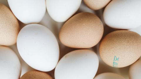 【食用安全】到底啡色雞蛋抑或白色雞蛋較有營養價值?食安中心解構影響蛋殼及蛋黃顏色深淺原因