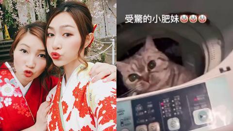 19年港姐冠軍黃嘉雯家姐涉洗衣機虐貓 警方上門拘捕28歲黃姓女保險經紀