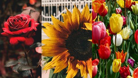 【情人節2021】10大浪漫愛情花語曖昧表白都啱用 送花不止紅玫瑰!繡球花/滿天星表愛意