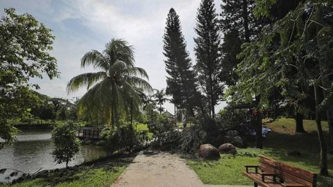 戴降噪耳機跑步聽唔到大樹倒塌聲 38歲女公園晨跑慘被樹木當場壓死