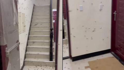 出門即見過百隻飛蟻佔據樓梯阻返工 網民教路1招生活智慧輕鬆KO飛蟻