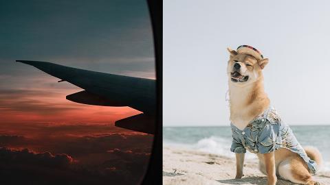 【消委會】寵物移民公司報價與實際開支竟差190% 運柴犬到澳洲2萬變收5.8萬