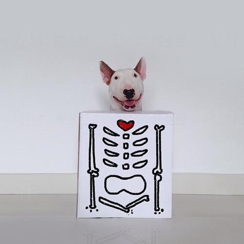 x-ray照