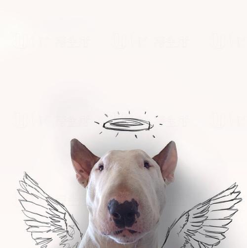 墮落凡間的天使(狗?)