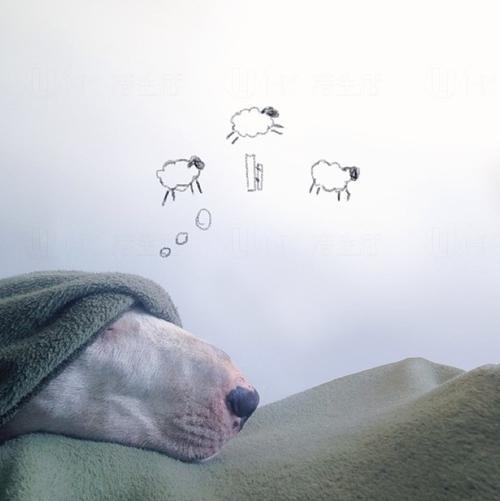訓唔著,數下羊羊先