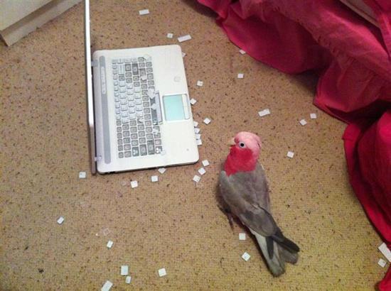 啄完啲鍵盤制出嚟,擺個呆樣扮無事?