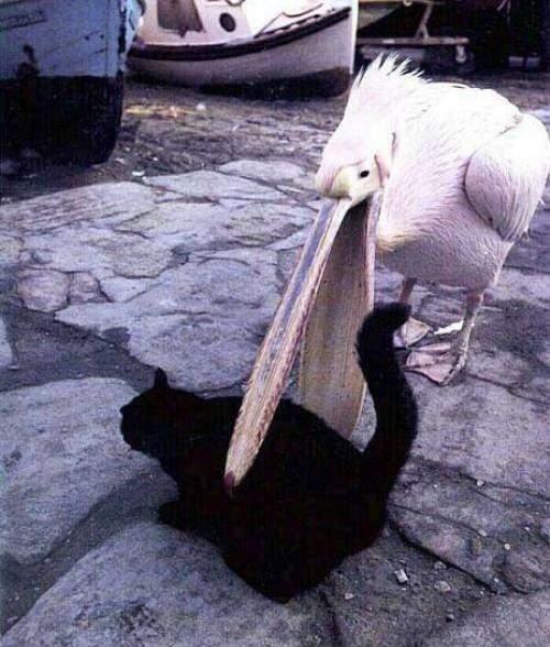 唔好以為口生得大,就咩都可以食落肚,點賠番隻貓畀人…