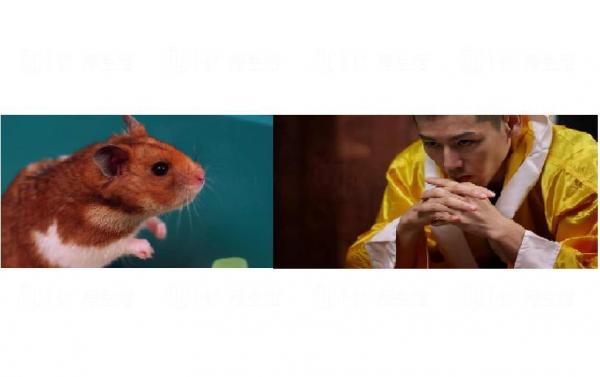 小林尊與小倉鼠的對望,一睇就知會鬥到你死我活。