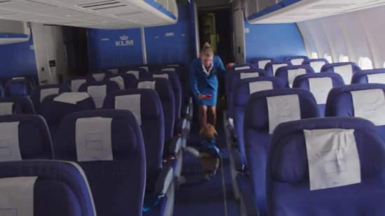 每次乘客落機後,空姐們都會檢查一次飛機座位上有沒有留下客人的物品,如有的話,神犬米格魯Sherlock這時就會登場了!