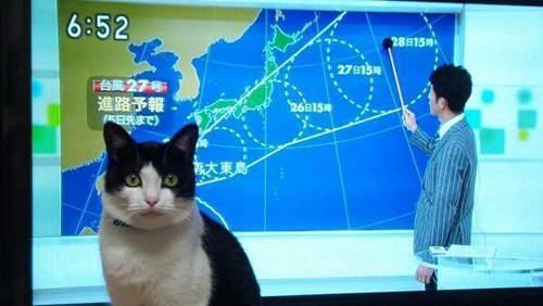 你好!這節是由我貓貓同大家預測天氣。