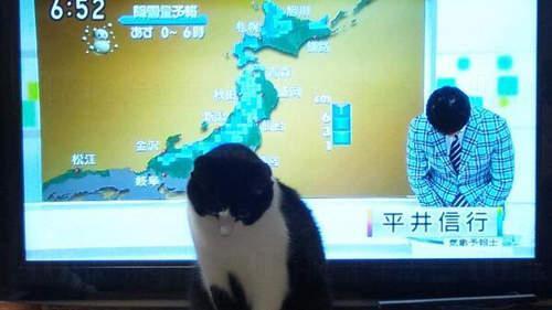 今天貓貓天氣預報去到這裡,我們下次再見!(鞠躬)