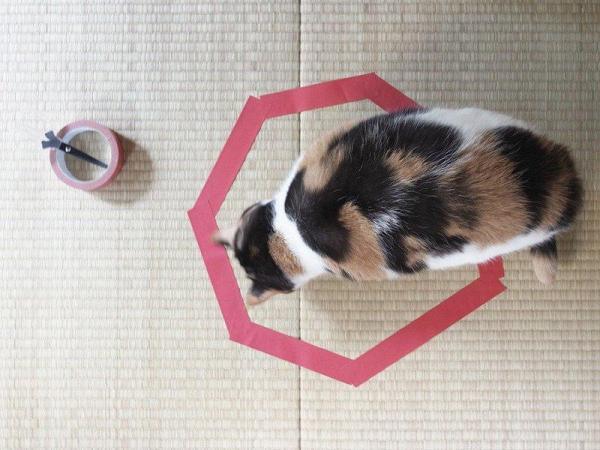 果真,充滿好奇心的貓貓抵受不到引誘,走過來霸地盤