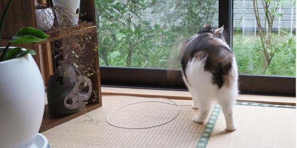 只要卷一個圈,貓貓又走過來啦