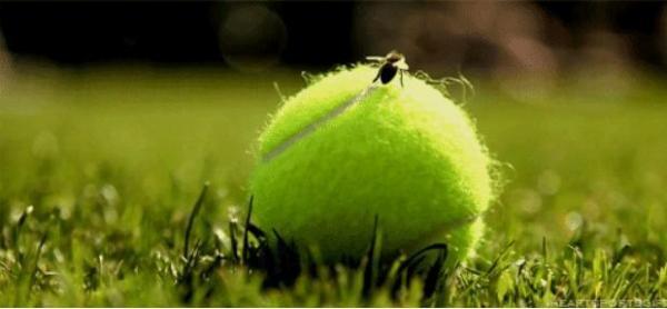 新開的網球