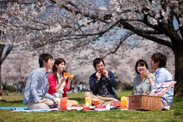 日本 花見