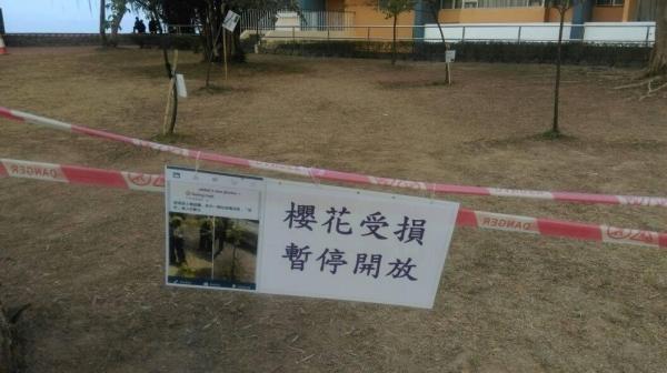 中大櫻花受損   暫停對外開放(圖:新亞學生會Facebook)