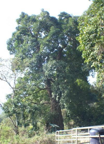 圖:樹木谷