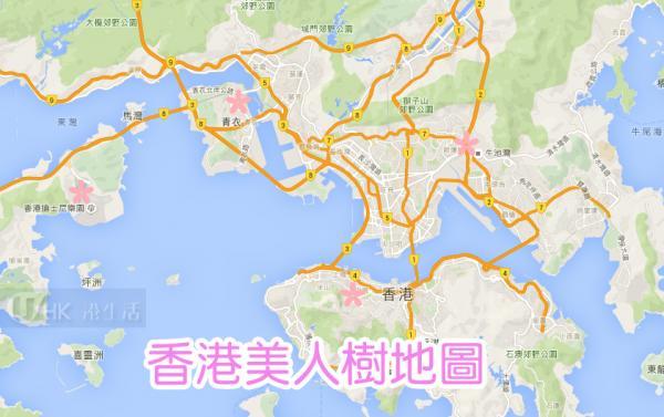 賞櫻前奏!香港美人樹地圖