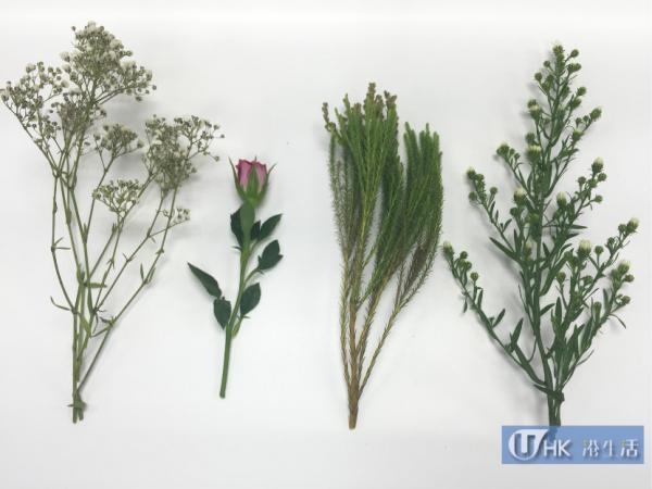 微波爐乾燥法測試用鮮花