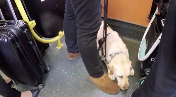 遇到導盲犬要知道的3件事