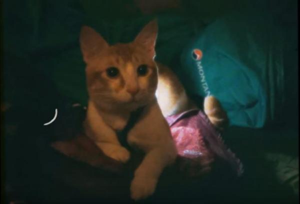 港韓90後女生帶住貓咪去露營 教你5招戶外溜貓小貼士