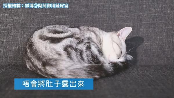 貓咪大字型瞓=信得過你!拆解貓星人4大睡姿