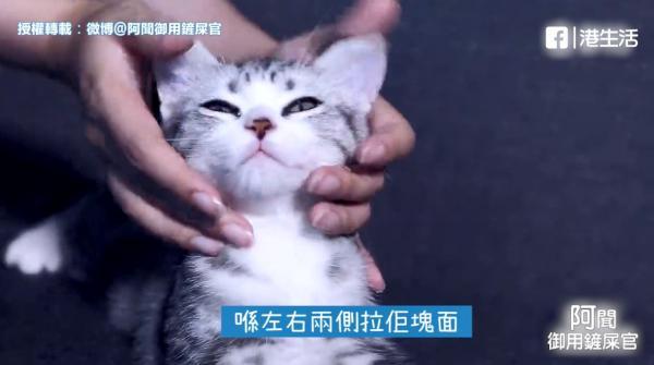 摸幾耐都唔會走!9招摸貓絕技令貓咪融化痴實你