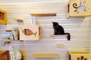 貓貓在店內自由走動。(喵星球Facebbok)
