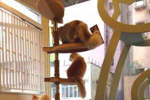 很可愛的貓貓。(喵星球Facebbok)