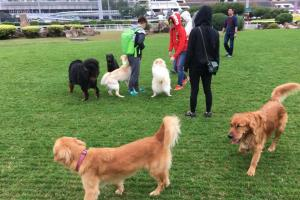 不少狗主逢假日都會帶愛犬到彭福公園散步