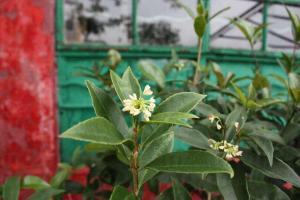 淨院旁種有很多桂花樹,聞到桂花香就知到了淨院啦。