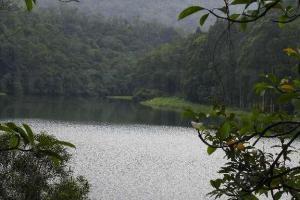 利用樹葉做一個畫框,更突顯水塘的優美。
