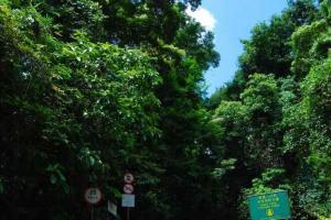 大埔滘自然護理區的入口,可見已是樹木林蔭的一條大道。