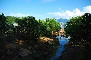 紅樹林也是其中一個龍友拍攝熱點。
