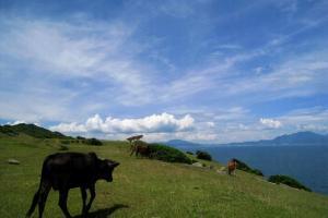塔門另一個最常見的便是遍地牛隻,這些牛隻大多都悠閒地低頭大嚼,基本上不會理會身邊人群。