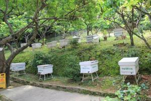 蜂場裡面放滿一個個養蜂箱。