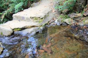 澗水十分清澈,連潭底的落葉都可看得一清二楚。