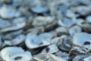 蠔殼本身能夠儲存海洋裡過多的二氧化碳,有助維持近岸水質的酸鹼度。