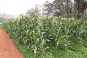 有機種植區內種植了多種時令蔬果,大家可參與除草、翻土和收割等工作。