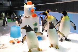 南極企鵝,卡娃兒呢!