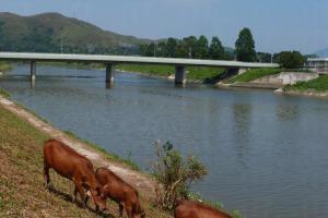 牛大媽帶着子女出來吃草,場面溫馨。