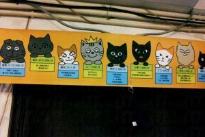 牆上貼有 11 隻駐場貓咪小檔案