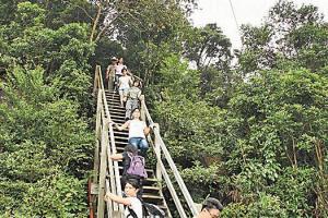 走在昂坪棧道上,你還可和纜車上的乘客揮手 Say Hi,吊鐘花林在近山頂處。