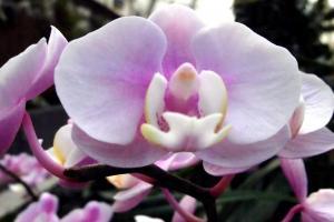 溫室內種在不少蘭花
